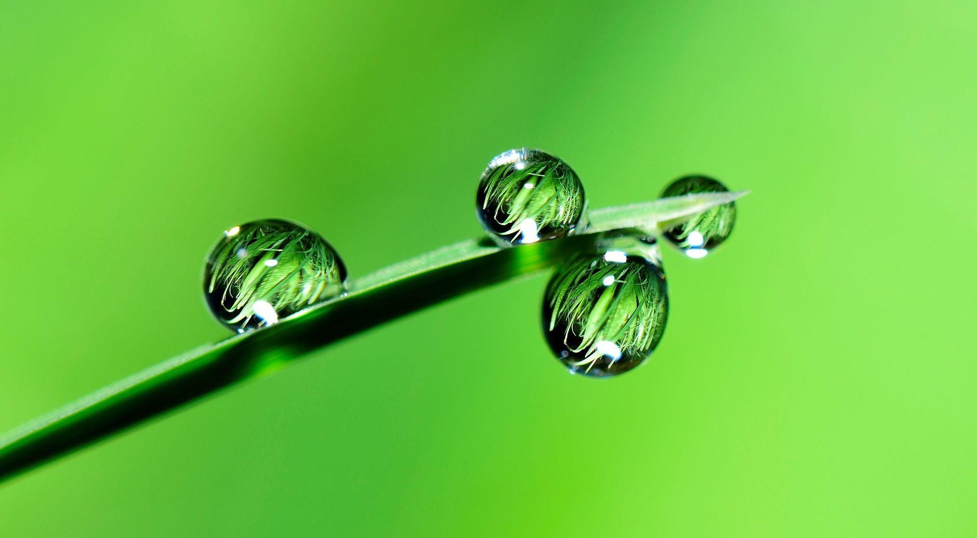 Léčba kožních nemocí zelenými potravinami